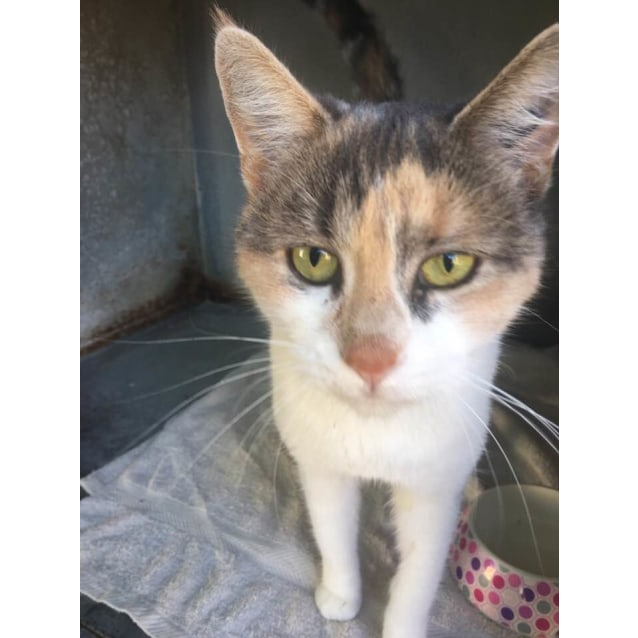 Photo of Jessica (Ca V18 137) *Currently Free To Adopt*