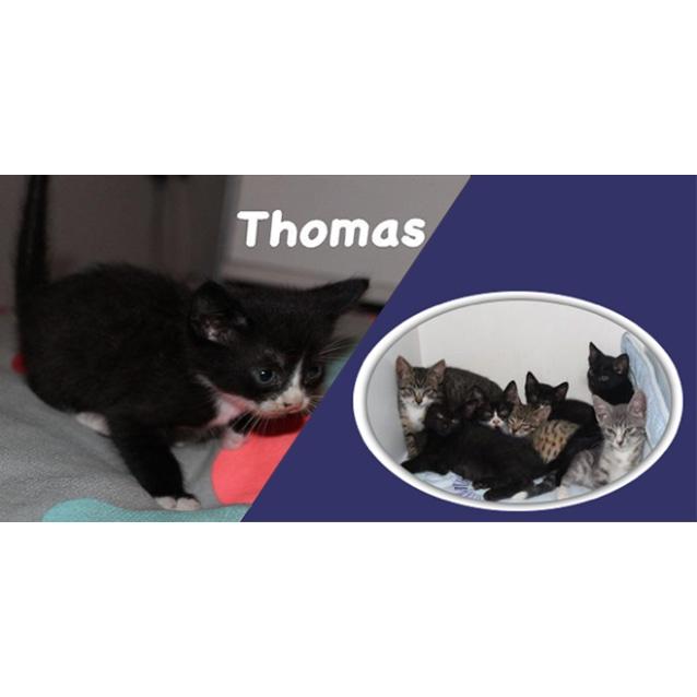 Photo of Thomas