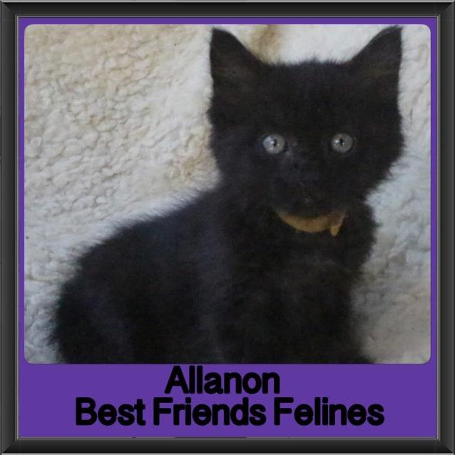 Photo of Allanon