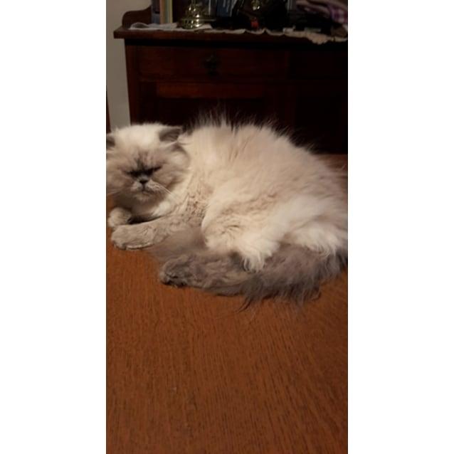 Photo of Meka