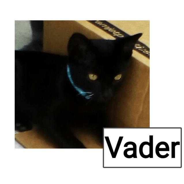 Photo of Vader