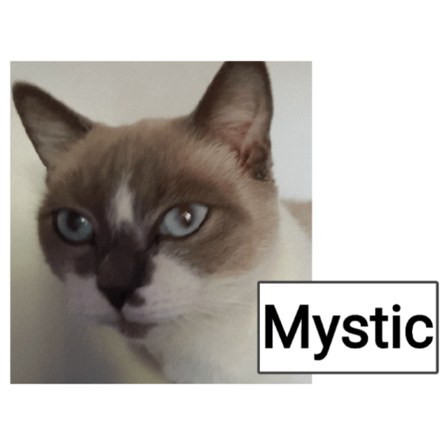 Photo of Mystic