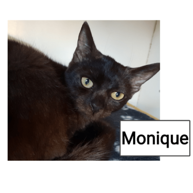 Photo of Monique