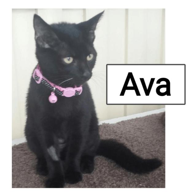 Photo of Ava