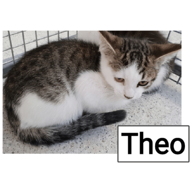 Photo of Theo