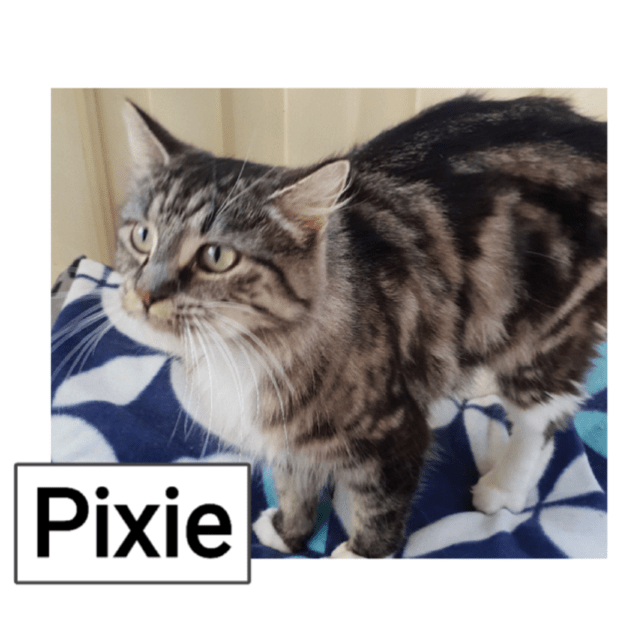 Photo of Pixie
