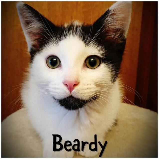 Photo of Beardy