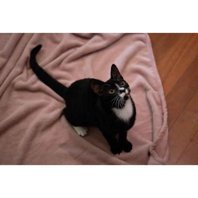 Photo of Meeka