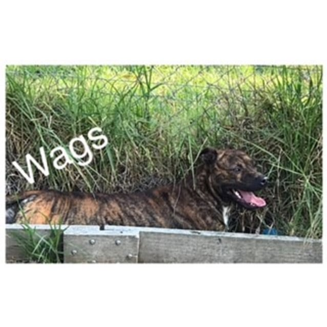 Photo of Waggs