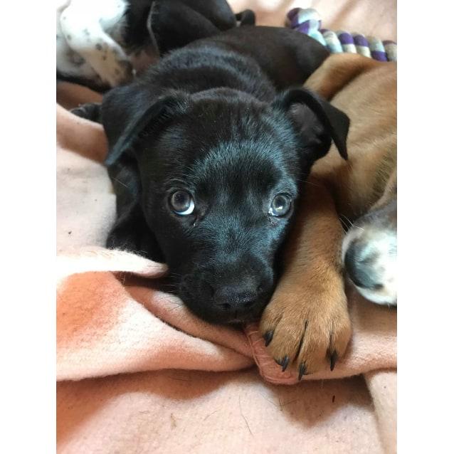 Photo of Cora
