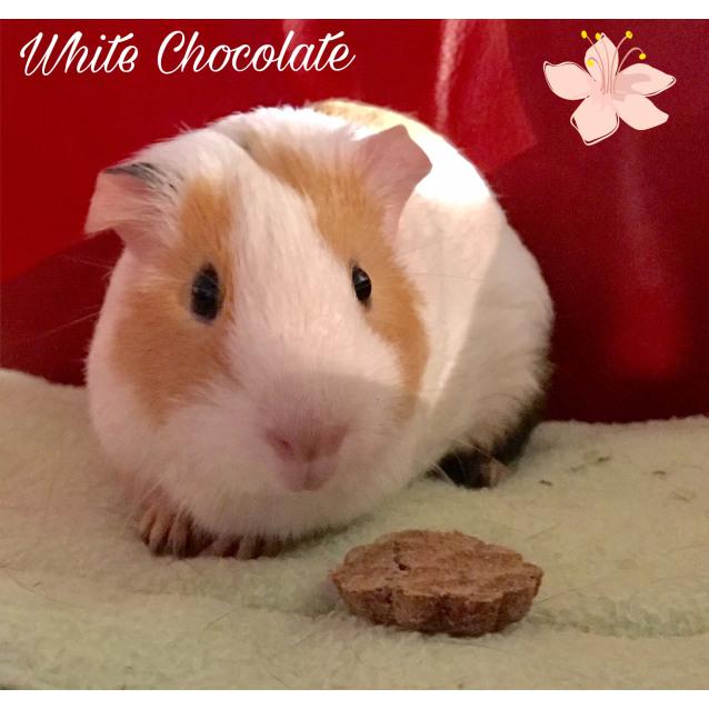 Photo of White Chocolate