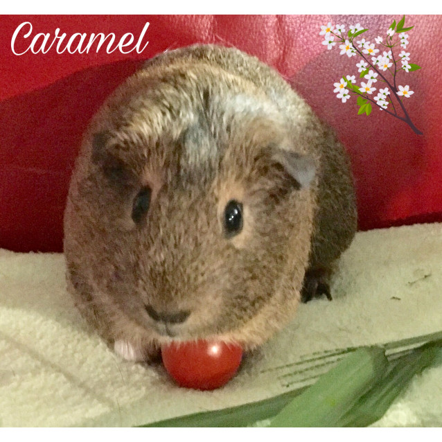 Photo of Caramel