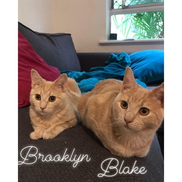 Photo of Blake