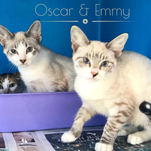 Photo of Oscar & Emmy