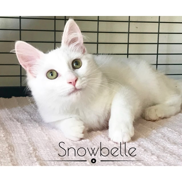 Photo of Snowbell