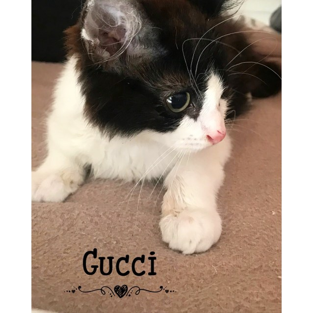 Photo of Gucci