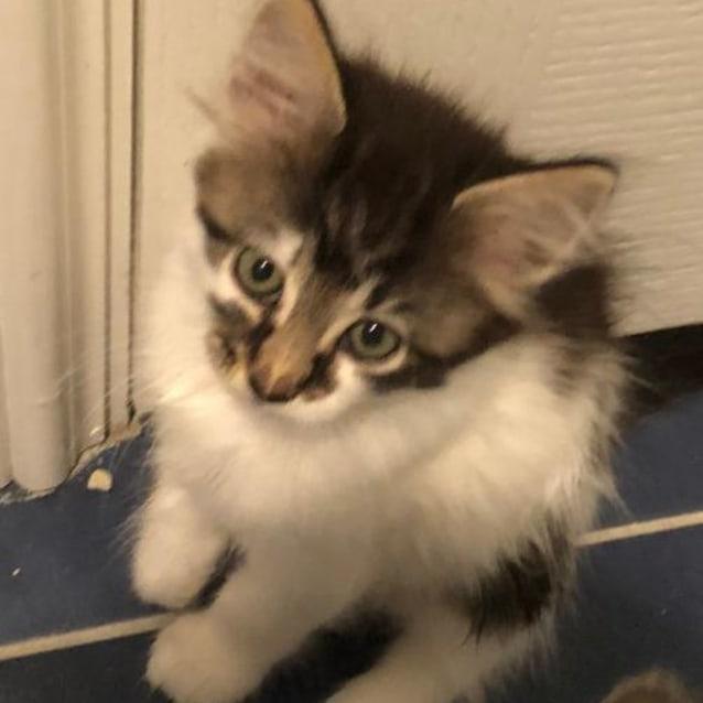 Photo of Fluffy Boy Ac0212 *Adoption Pending* No More Enq
