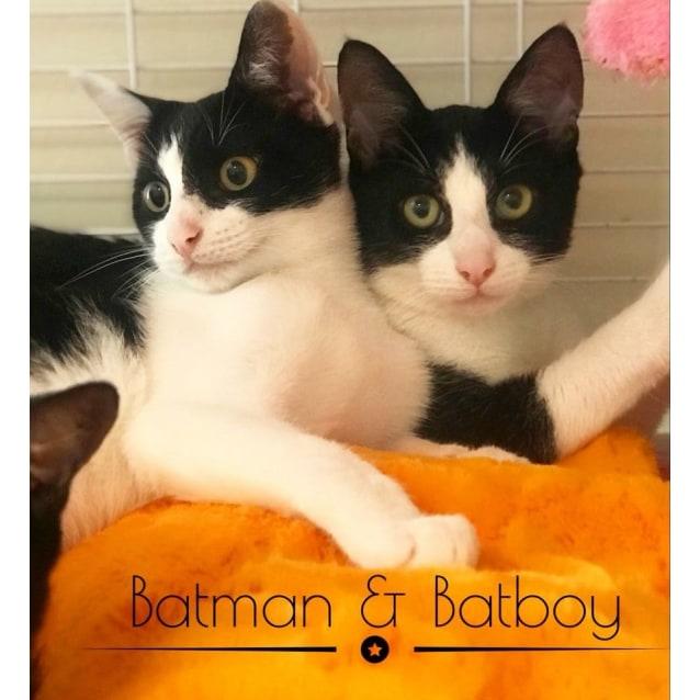 Photo of Freckle & Bat Boy