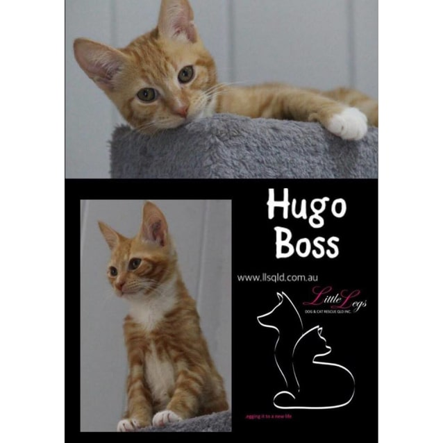 Photo of Hugo Boss