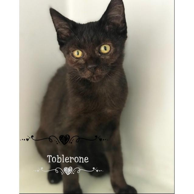 Photo of Toblerone