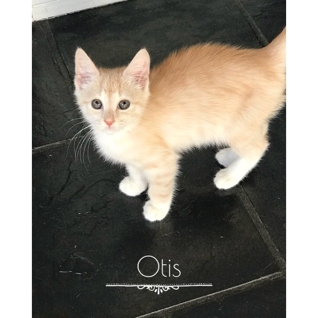 Photo of Otis