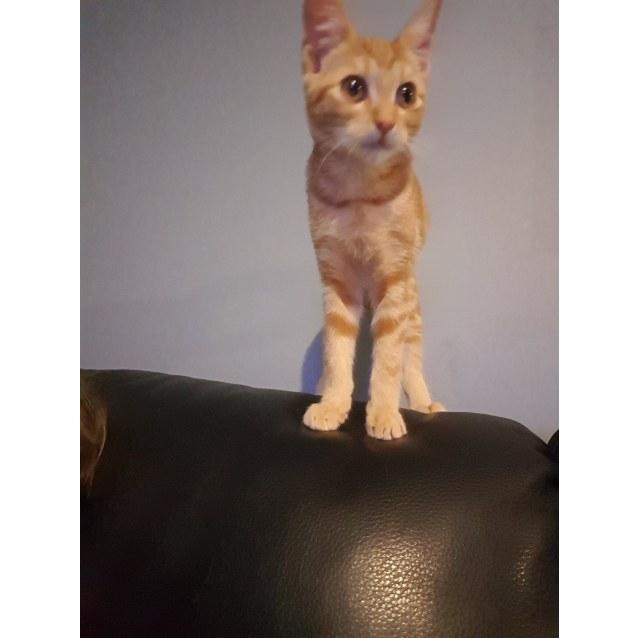 Photo of Porthos
