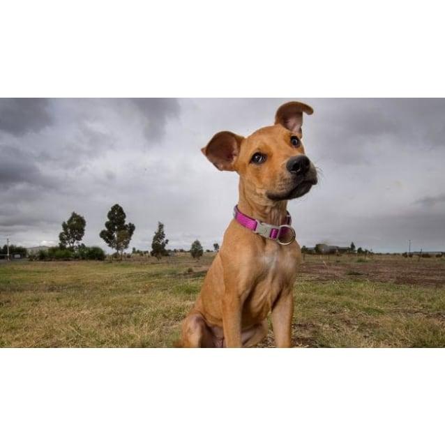 Photo of Tesha