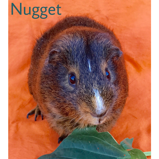 Photo of Nugget