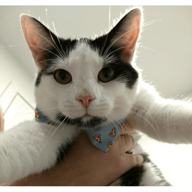 Photo of Purrcy
