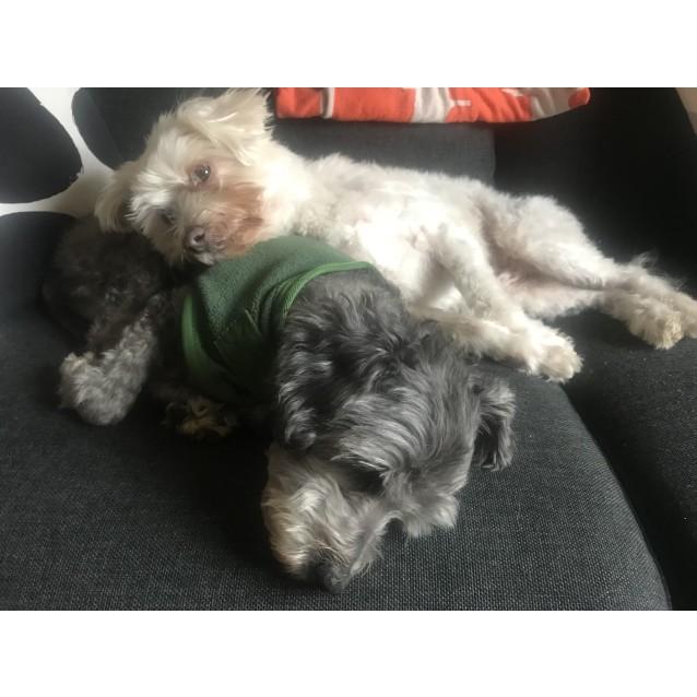 Photo of Johnny & Frankie