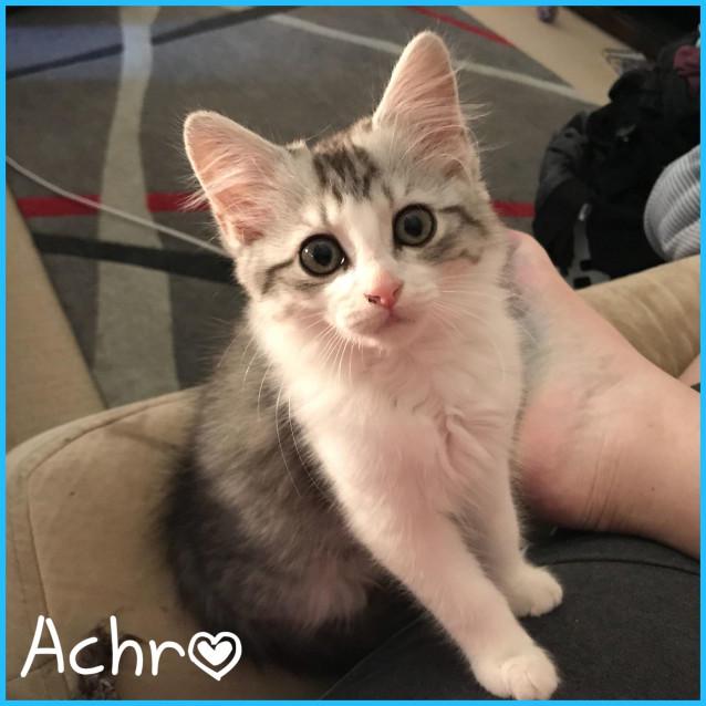 Photo of Achro