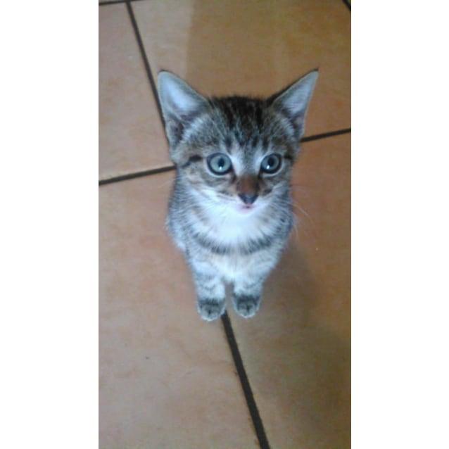 Photo of Aoki