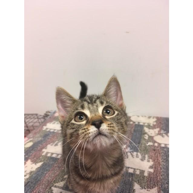 Photo of Imani