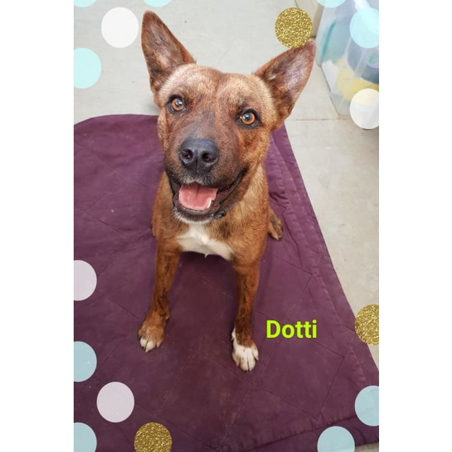 Photo of Dotti