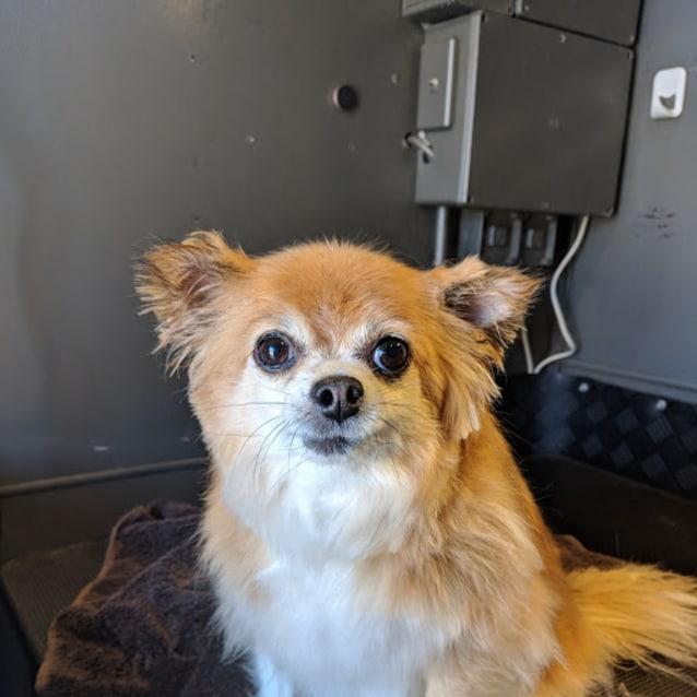 Photo of Tuppy