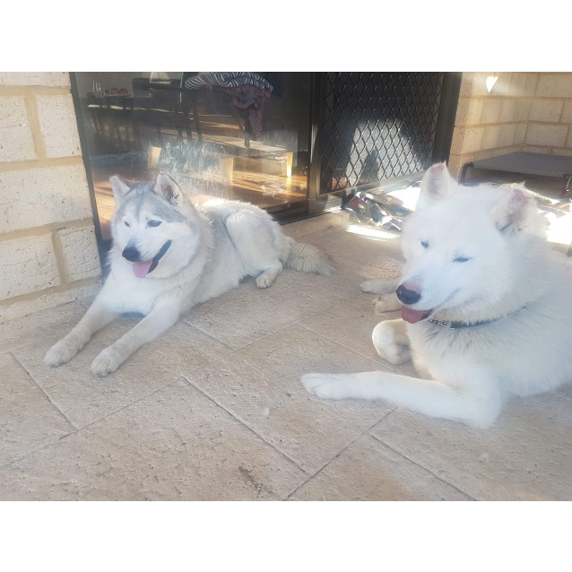 Photo of Mya And Wolf