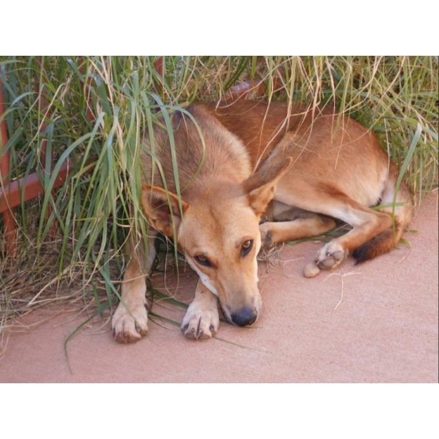 Photo of Floki