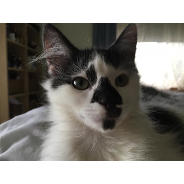 Photo of Moo **2nd Chance Cat Rescue**