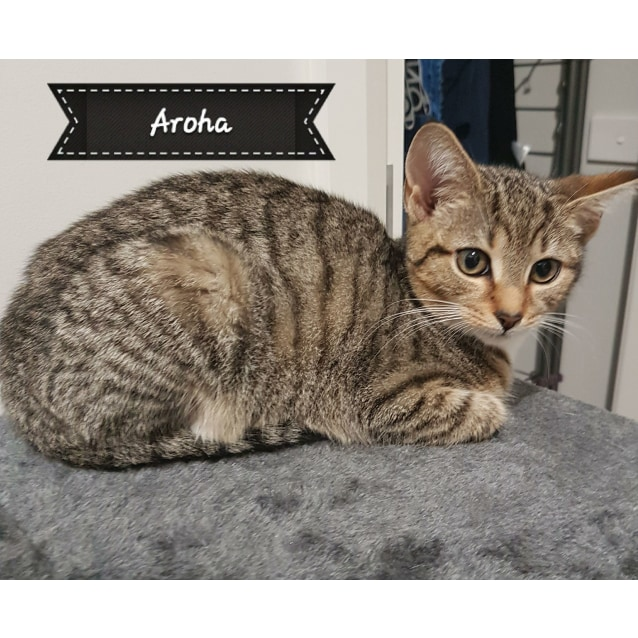 Photo of Aroha **2nd Chance Cat Rescue**