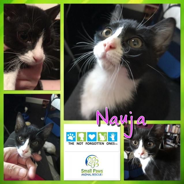 Photo of Nauja