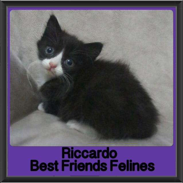 Photo of Riccardo
