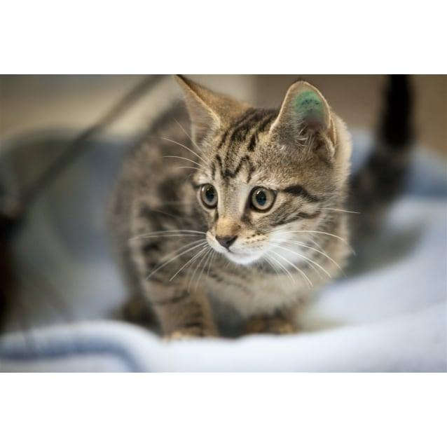 Photo of Bucky