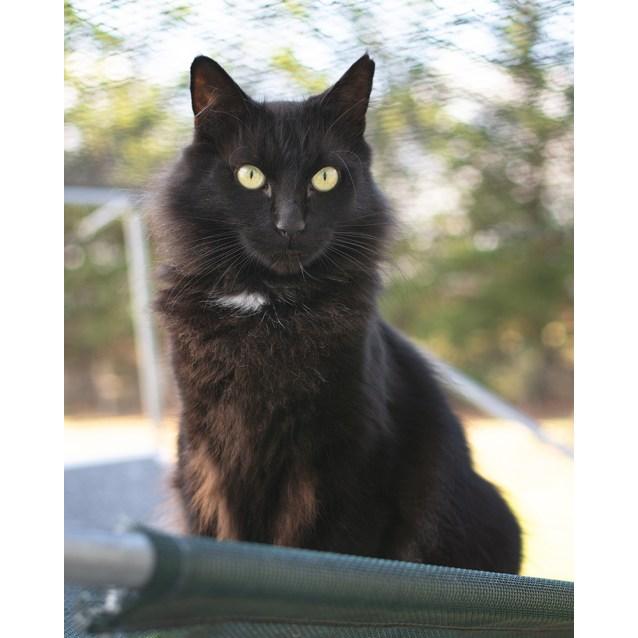 Photo of Oscar (85047)
