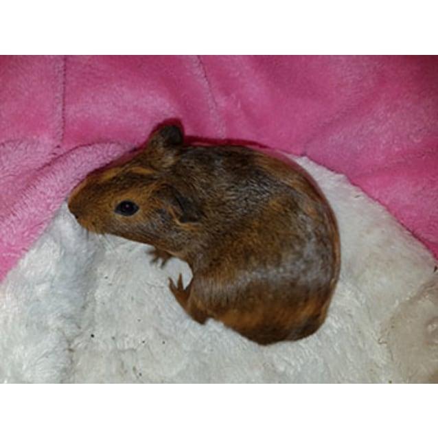Photo of Effi