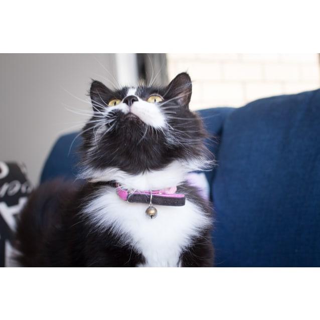Photo of Betty $99