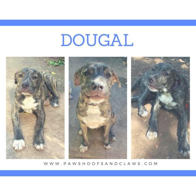 Photo of Dougal