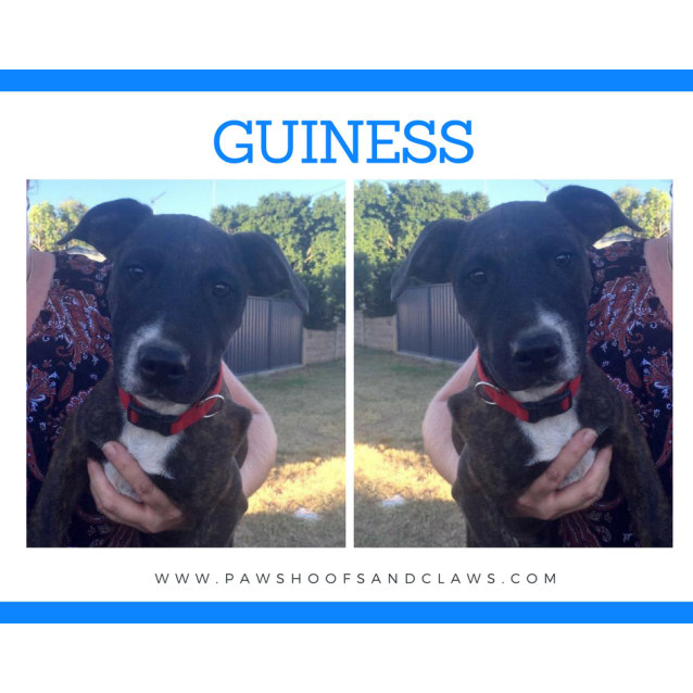 Photo of Guiness