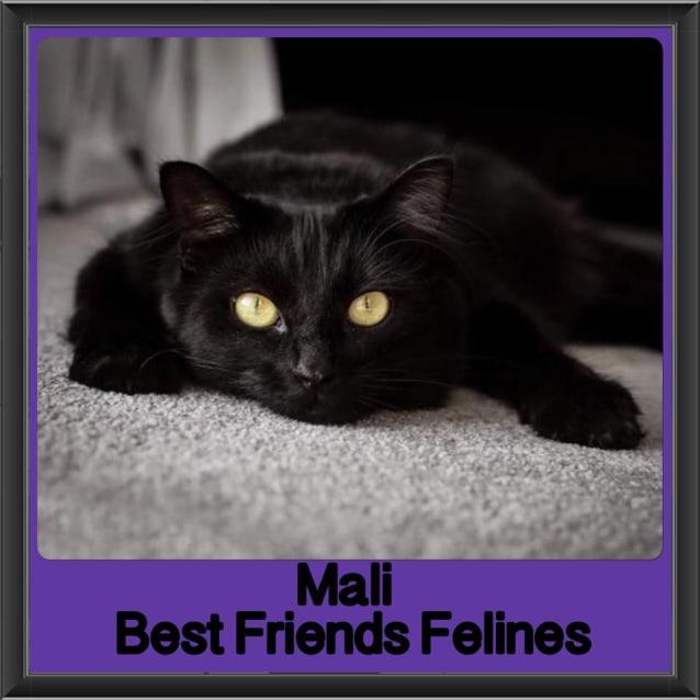 Photo of Mali