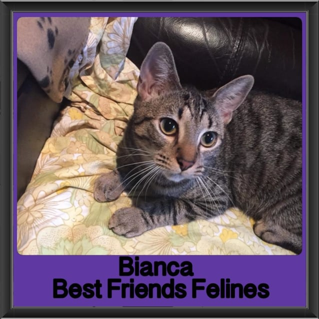 Photo of Bianca