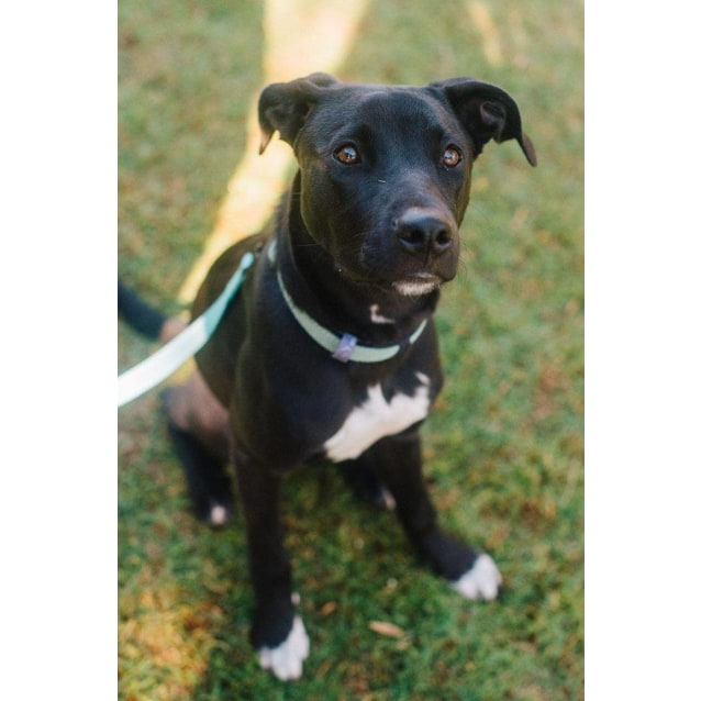Photo of Cassidy **Adoption Pending**